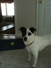 Nellie - Pet Photo