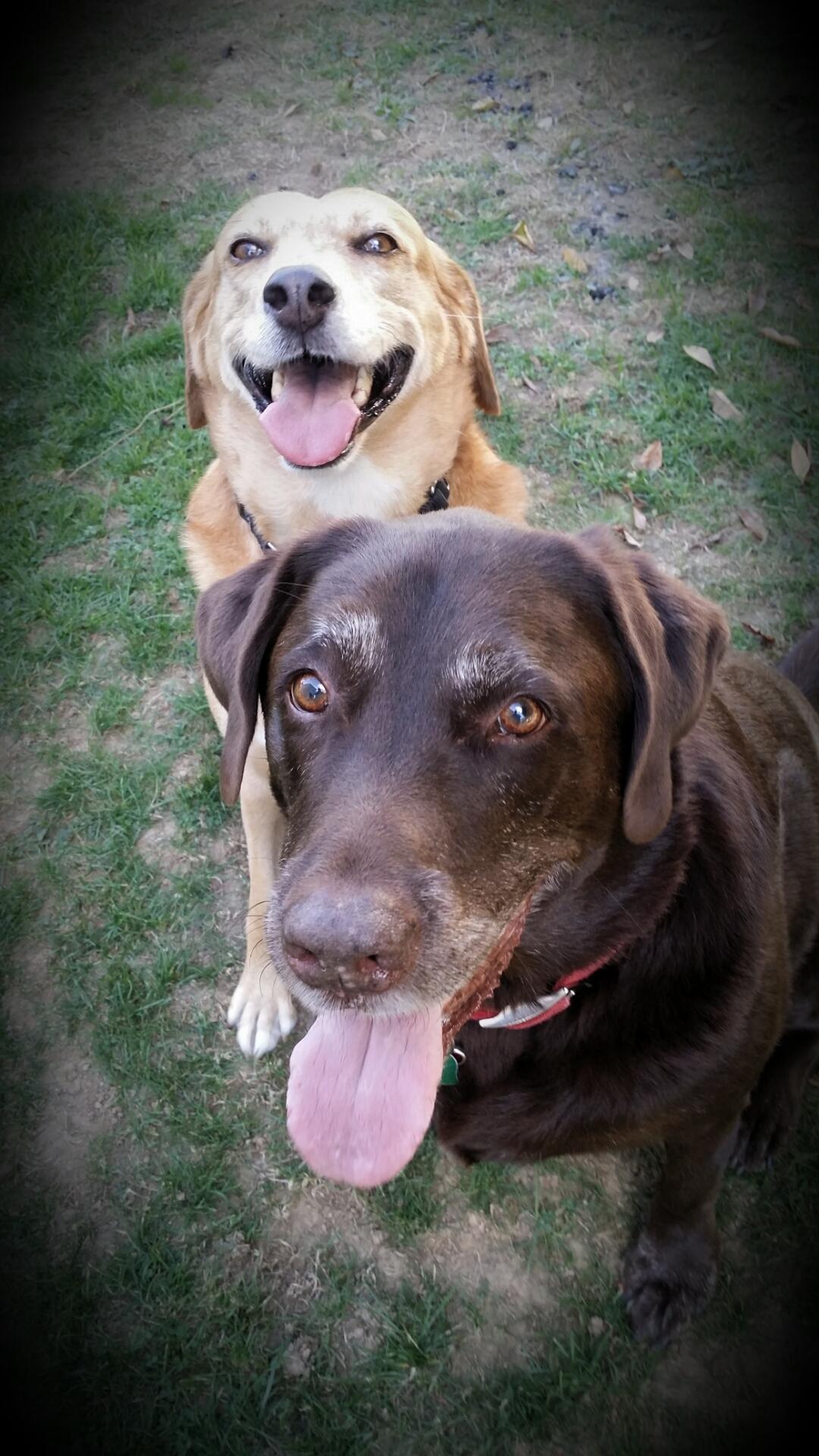 Rosie & Chase